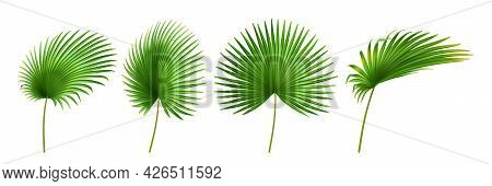 Tropical Leaves, Isolated Palmetto Plant Decorative Foliage In Different Positions And Shapes. Exoti