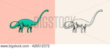 Dinosaur Brachiosaurus Or Sauropod, Plateosaurus, Diplodocus, Apatosaurus, Fossils, Winged Lizard. P