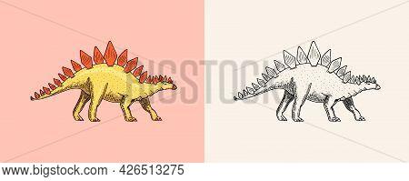Dinosaur Stegosaurus, Fossils. Prehistoric Reptiles, Animal. Engraved Vintage Hand Drawn Sketch For