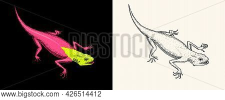 Lizard Or Gecko Or Agama. Exotic Reptiles Or Blue Snakes, Red Mountain, Sinai Rainbow Agama. Wild An