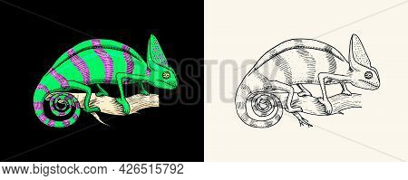 Chameleon Lizard, American Green Iguana, Exotic Reptiles. Wild Animals In Nature. Engraved Hand Draw