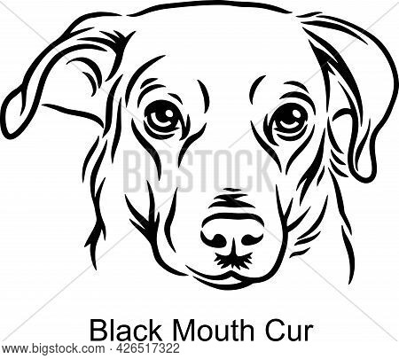 Black Mouth Cur Portrait Dog In Line Style - Pet Portrait In Light Style Head Isolated On White