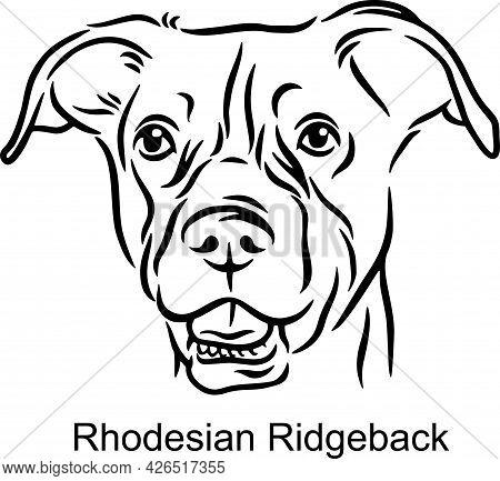 Rhodesian Ridgeback Portrait Dog In Line Style - Pet Portrait In Light Style Head Isolated On White