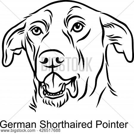 German Shorthaired Pointer Portrait Dog In Line Style - Pet Portrait In Light Style Head Isolated On