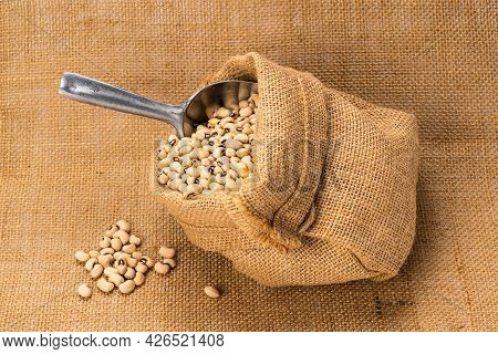Closeup Of Soy Beans In A Sack With Aluminum Multi Purpose Scoop On Sackcloth. Soybeans Are Annual L