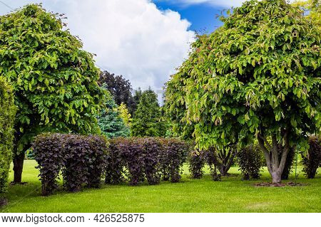 Garden With Trees And Deciduous Bushes In A Park With Green Grass, Natural Plants On A Summer Day Ag