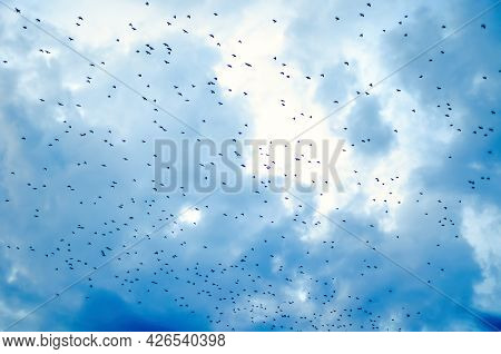 Flock Of Crows Flying In The Sky