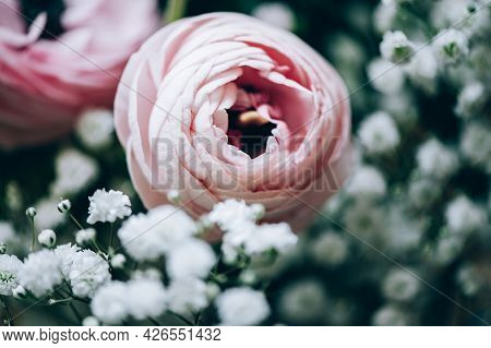 Tender Ranunculus Flowers On Floral Background. Bunch Of Persian Buttercup Flower