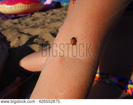 Petrozavodsk, Russia, July 10, 2021. A Girl On A Sandy Beach. A Ladybug Beetle Crawls On The Child's