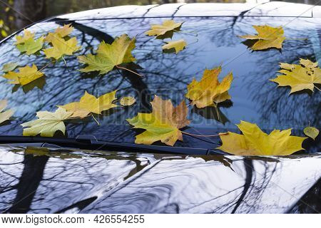 Yellow Autumn Maple Leaves Lie On The Windshield Of A Black Car In A Beautiful Park