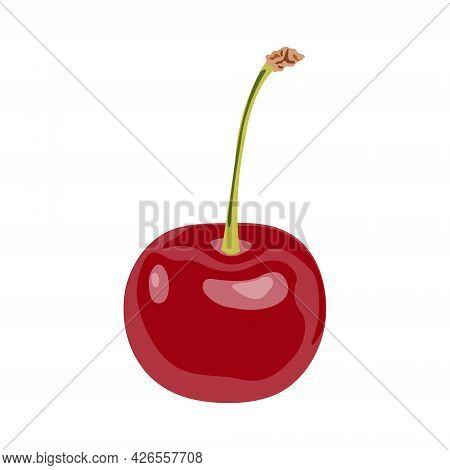 Red Delicious Ripe Cherry With A Host Isolated On A White Background. Vector Cherry Illustration. Ca