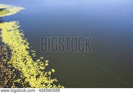 Aerial Over Green Yellow Algae On Waters Edge Of Catchment Area Teemburra Dam Queensland Australia