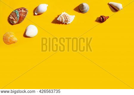 Composition Of Exotic Seashells On Yellow Background.