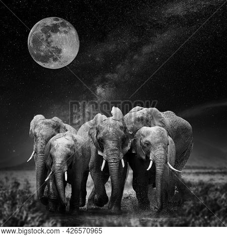 Beautiful Night Landscape With Elephant, Moon And The Milky Way Galaxy. Black And White