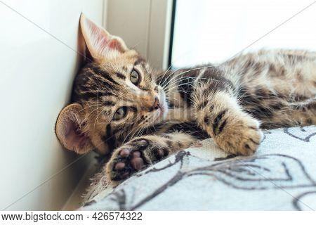 Closee-up Little Bengal Kitten On The Pillow