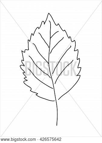 Hawthorn Leaf In The Doodle Style. Hand-drawn Silhouette.  Botanical Medicinal Vector Plant