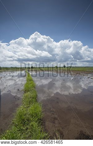 Rice Fields Filling With Water After Tropical Storm Showing Higher Walkways Built To Alow Farmers To
