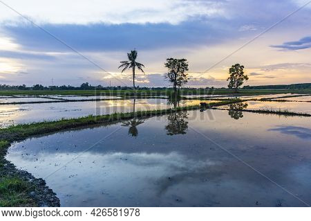 Late Evening Sunset Showing Water Flooded Rice Field For Start Of Rice Growing
