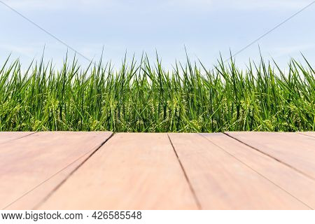 Empty Wooden Floor On Rice Fields With Blue Sky