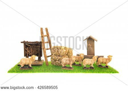 Sheep cattle at the farm isolated over white background