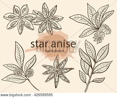 Star Anise Seasoning Sketch, Vector Illustration. Set Of Anise Stars And Branch With Flowers, Line H