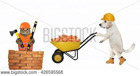 A Dog Labrador Builder In A Construction Helmet Pushes A Wheel Barrow Full Of Red Bricks. White Back