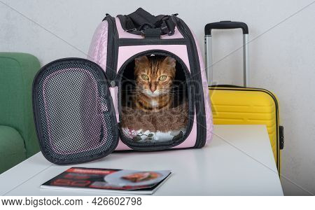 Cute Bengal Cat Sitting In Pet Carrier And Suitcase Indoors.