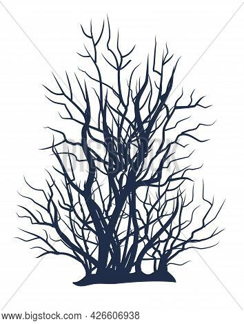 Bare Tree Without Leaves. Dark Silhouette. Gloomy. Dense Crown With Many Small Branches. Or Close-up