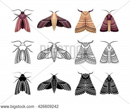 Boho Set Of Moths With Geometrical Patterns. Outline, Flat And Simple Style.