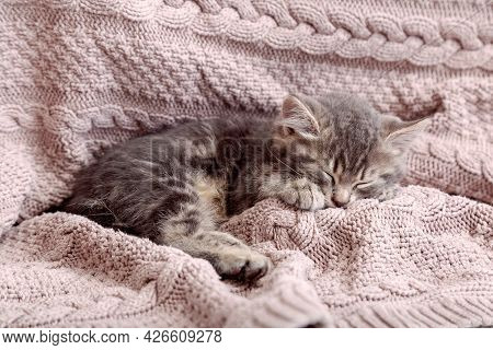 Baby Cat Sleep On Cozy Pink Blanket. Fluffy Tabby Kitten Snoozing Comfortably On Knitted Bed. Kitten
