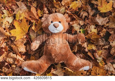 Funny Brown Fluffy Teddy Bear Toy Lies On Large Pile Of Dry Orange Leaves In Autumn Park On Nice Sun