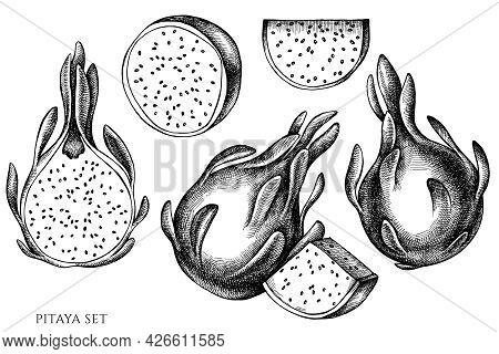 Vector Set Of Hand Drawn Black And White Pitaya Stock Illustration