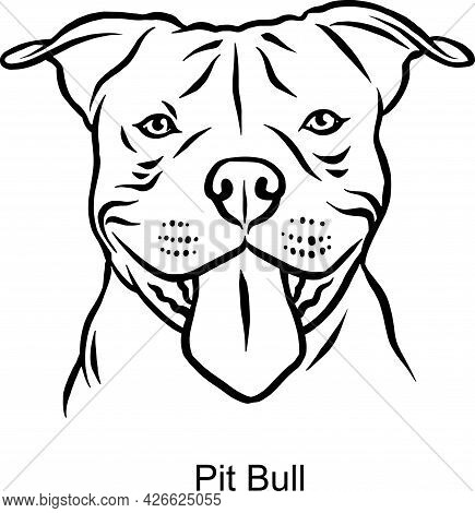 Pit Bull Portrait Dog In Line Style - Pet Portrait In Light Style Head Isolated On White