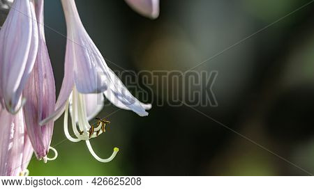 Purple Flower With Long Pistils On A Green Sunny Background. Banner