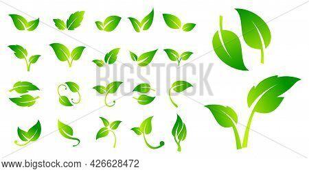 Set Of Leaf Vegan Signs Or Green Vegan Label Or Green Natural Badges Product Or Bio Ecology Vegan Co