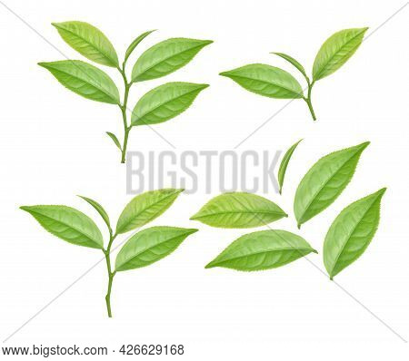 Top View Of Green Tea Leaf Isolated On White Background