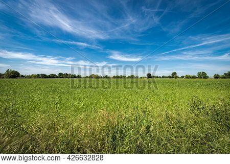 Rural Landscape With A Green Wheat Field In Springtime, Padan Plain Or Po Valley (pianura Padana, It