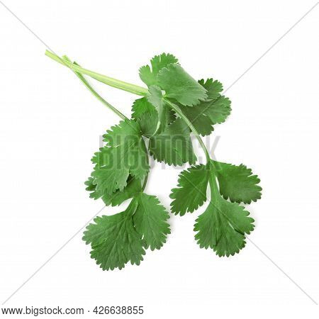 Aromatic Fresh Green Cilantro Isolated On White, Top View
