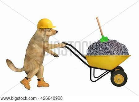 A Beige Dog Builder In A Construction Helmet Pushes A Wheel Barrow Full Of Crushed Stone. White Back