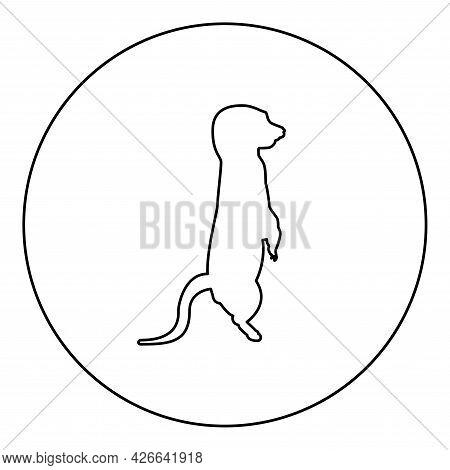 Meerkat In Pose Suricata Suricatta Silhouette In Circle Round Black Color Vector Illustration Contou