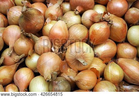 Heap of ripe raw onions as vegetable background.