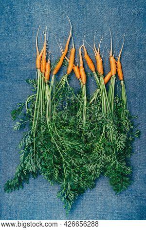 Fresh Carrots From The Garden. Small Carrot On Blue Background. Harvest Of Carrots. Vertical Frame