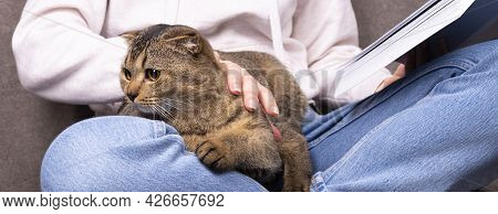 The Scottish Fold Cat Sits In A Woman's Arms. The Pet Is Hiding In The Hands Of The Owner Reading Th