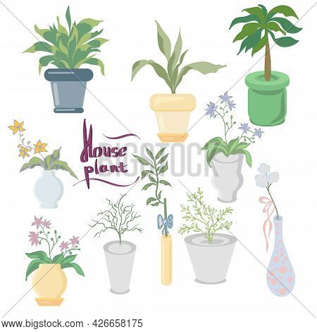 Set Of Houseplants And Flowers In A Pot In Flat Style. Indoor Gerb On Shelf. Living Room Design Deco