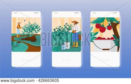 Berry Picking. Farmers Harvesting Raspberries. Mobile App Screens, Vector Website Banner Template. U
