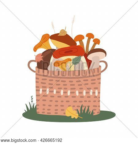 Basket Of Different Edible Mushrooms On The Grass. Hand Drawn Colored Flat Vector Illustration.