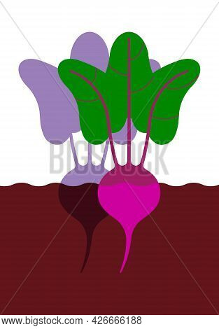 Beetroot In Ground. Minimal Style Red Beet With Leaves. Minimalistic Beetroot, Side View. Abstract G