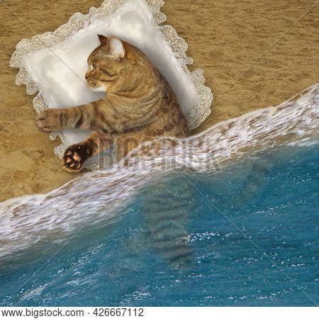 A Beige Cat Sleeps On A Pillow On The Beach Of The Sea.