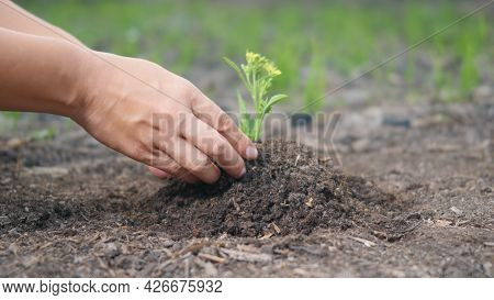 Woman Two Hand Helping Working Planting Seedlings Growing Young Tree Into The Ground To Dry Soil On