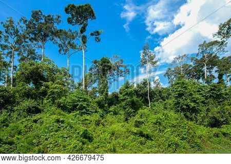 Top View Of Green Tree With Clear Blue Sky With Copy Space For Create Your Text, Background Of Green
